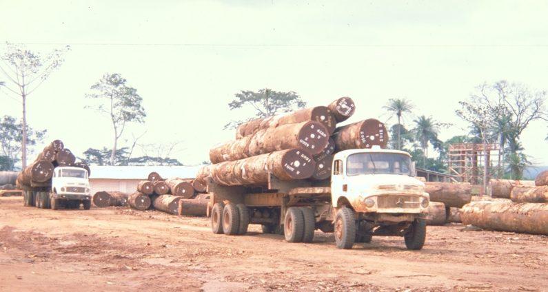 熱帯雨林から切り出した原木を満載した伐採トラック。