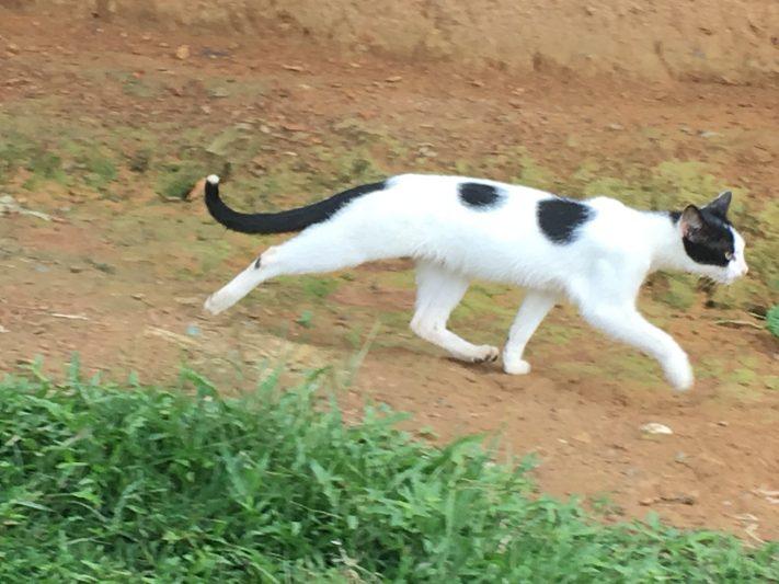 アフリカの森のネコ。